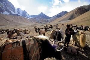 nomads kashmir