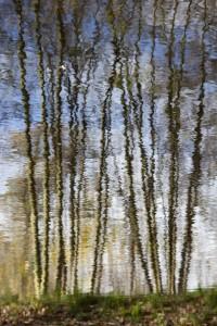 04 Bois de Boulogne nov.2009