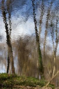 06 Bois de Boulogne nov.2009