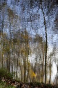08 Bois de Boulogne nov.2009