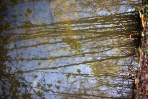 08 Reflets Bois de Boulogne