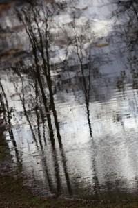 10 Bois de Boulogne nov2.2009