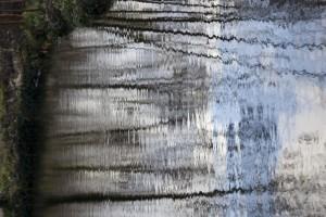 12 Bois de Boulogne nov.2009