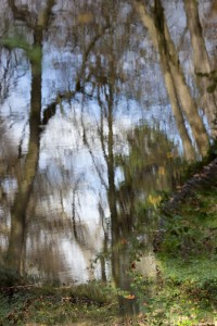 Bois de Boulogne nov.2009-2