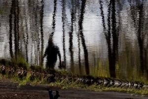 Reflets Bois de Boulogne-2