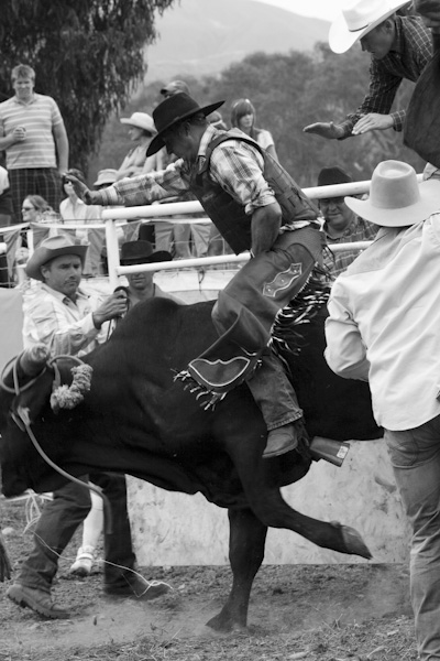 Rodeo-16