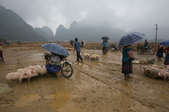 Vietnam Мюонг Кюонг