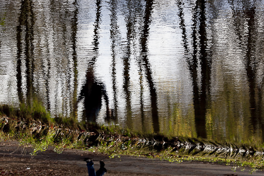 Bois de Boulogne, reflets