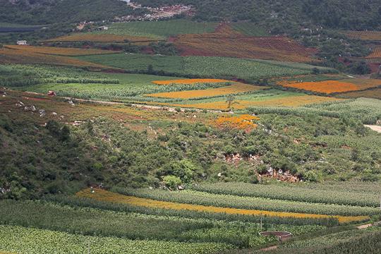 Yunnan-11